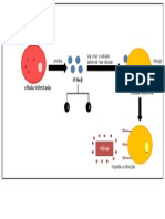 Acção Antiviral Dos Interferões