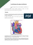 Sistema Circulatorio Animalescx