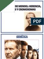 Genetica de Mendel (1)