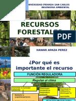 Reforma Forestal