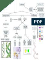 Acidos Nucleicos Mapa Cts