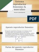Sistema reproductor femenino & masculino.pptx