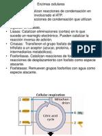 PDF Clase Palomares TCA