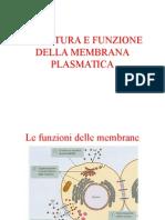 6 Struttura e Funzione Della Membrana Plasmatica p 14680 (1)