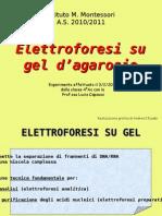 4AS elettroforesi  agarosio