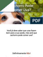 Cachorro Pode Comer Uva? Mito Ou Verdade?
