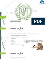Doença Do Trato Urinário Inferior de Felinos (