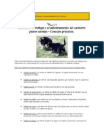 Adiestramiento canino 1