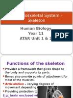 Musculoskeletal System - Skeleton PPT