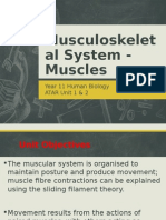 Musculoskeletal System - Muscles.pptx