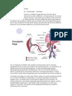 Apuntes Medicina Interna