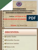 Sp-slides de Plano de producao  de Girassol