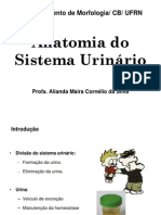 Aula Teorica_7_ Sistema Urinário