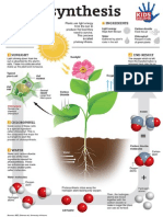 Photosynthesis Infographic Kids Discover