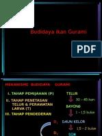 Budidaya Gurami