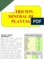 4 Nutricion Mineral