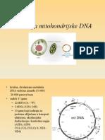 Evolucija Mt DNA