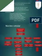 Citoplasma Celular