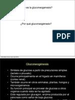 Glucogeno & gluconeogenesis