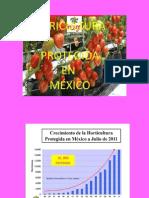 Agricultura Protegida Tomate 1