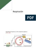 Respiracion_transpiracion