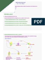 IMUNOPATOLOGI.pdf