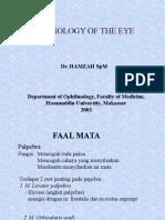 Kuliah Fisiologi Mata
