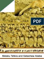 Camel in Ethiopia