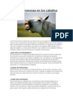 Las feromonas en los caballos.docx