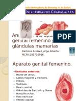 Anatomía Del Aparato Genital Femenino y Glándulas Mamarias