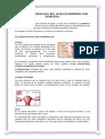 Anatomia y Fisiologia Del Aparato Reproductor Femenino