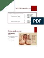 Clasificacion de Los Organos Sexuales
