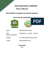 Informe de Hijuelos Platano
