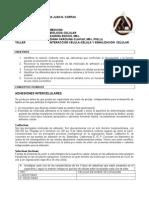 TallerSeñalizacionCelular-InteracciónCélulaCélula (2)