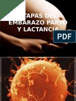 Fecundacion Parto y Lactancia