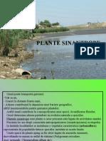 L.P. 5 Plante Sinantrope 2014
