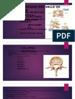 articulaciones-vertebrales (1)