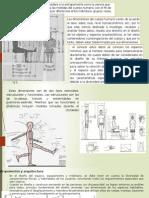 ergonomia y antropometria.pptx