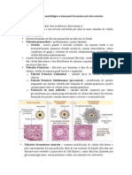 Histologia Sistema Reprodutor Feminino