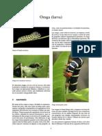 Oruga (Larva)