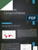 Subclase Carophyllideae
