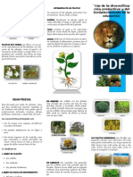 Triptico Reino Plantae[1]