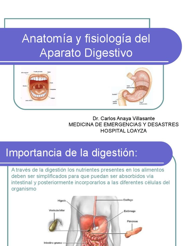 Aparato Digestivo Ppt Dr. Carlos (1)