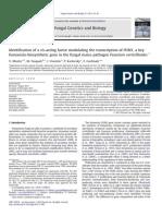 2013 Transcript Control of FUM1 Fungal Genetics and Biology