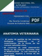 Introduccion a La Anatomia veterinaria