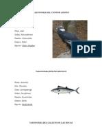 Taxonomia Del Condor Andino