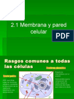 2.1.1. Membrana y pared celular.ppt