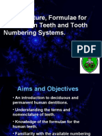 Nomenclature, Formulae for Mammalian Teeth and Tooth Numbering Systems