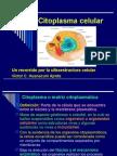 Citoplasma Celular 2008