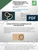Exposicion generalidades de metazoarios..pptx